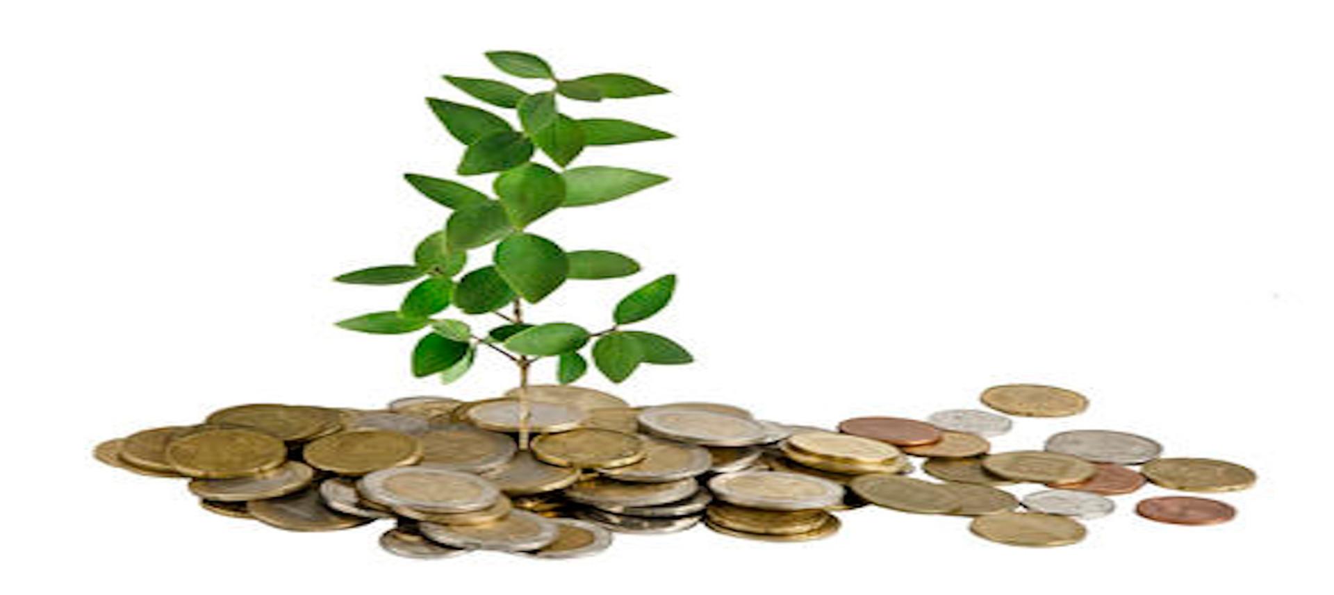 Bachelor i bærekraftsøkonomi